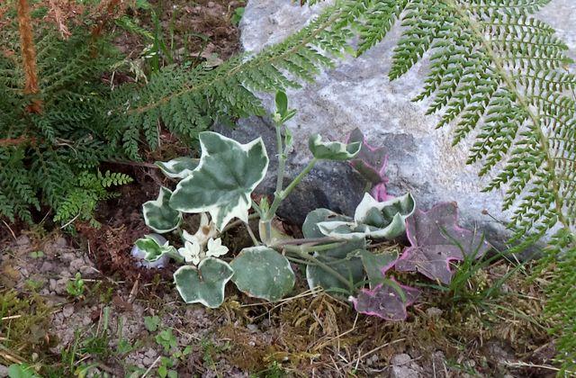 Vente achat de plus de 11000 plantes en ligne en direct for Achat de plantes en ligne