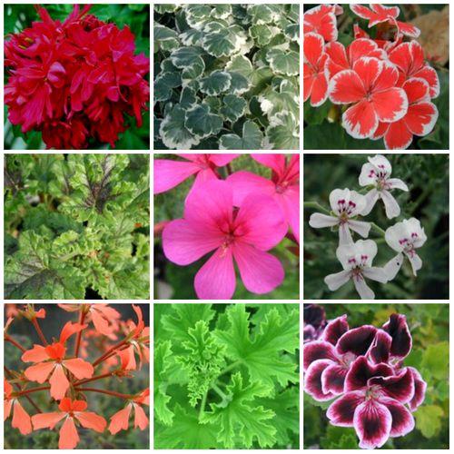 Vente achat de plus de 11000 plantes en ligne en direct for Achat plante en ligne